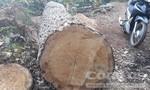 Bi hài bảo vệ rừng thuê người vào phá rừng