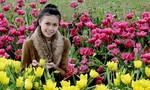 10 loại hoa  Đà Lạt nở vào dịp mùa xuân