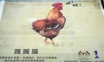 Xin lỗi vì dùng hình ảnh gà 'sủa' tiếng chó mừng năm Tuất