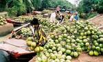 Vinamilk: Mua công ty mía đường, đầu tư vào doanh nghiệp chế biến dừa