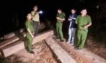 Mật phục bắt đoàn xe máy cày chở gỗ lậu trong đêm