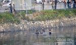 Thanh niên chạy hớt hải rồi nhảy xuống kênh Tàu Hủ mất tích