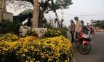 Hoa tết từ các tỉnh Miền Tây tô thắm Bến Bình Đông