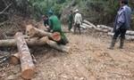 Tan hoang rừng phòng hộ Sơn Động