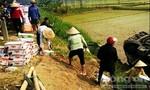Người dân giúp tài xế gom hàng sau khi ô tô tải lật ngửa bụng dưới ruộng
