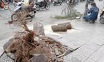 Cây xanh ngã đè 4 người trong sáng 23 Tết ở Sài Gòn