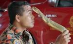 Người huấn luyện rắn nổi tiếng Malaysia bị rắn hổ mang cắn chết