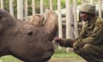 Con tê giác trắng phương bắc đực cuối cùng đã chết