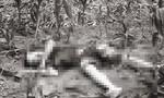 Thanh niên bị truy sát, tử vong trong ruộng ngô