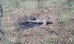 Đà Lạt: Phát hiện một xác nữ cháy đen trong rừng thông