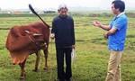 Sẽ xử lý việc bắt dân đóng thuế đồng cỏ khi nuôi trâu bò