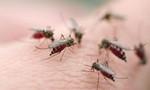 TP.HCM: Hơn 3.000 ca mắc sốt xuất huyết