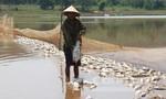 Hàng chục tấn cá chết trắng mặt hồ 22 héc ta