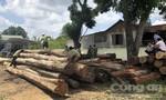 Bộ Công an phá vụ lậu gỗ lớn ở Đắk Nông