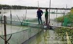 Nông dân ĐBSCL đua nhau đào ao nuôi cá tra: Mạo hiểm hơn… đánh bạc!