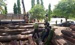 Vụ gỗ lậu ở Đắk Nông: Bắt đàn em thân tín của trùm Phượng 'râu'
