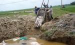 Doanh nghiệp chôn 377 con heo chết, hôi thối cả khu vực