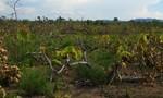 Ba đối tượng chặt phá 18ha rừng khu vực biên giới