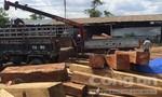 Bắt khẩn cấp một trùm gỗ lậu tại Gia Lai