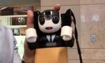 An tâm du lịch một mình tới Nhật nhờ RoboHon