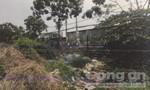 Tìm nhân chứng vụ thi thể trẻ sơ sinh bị heo rừng tha ở Sài Gòn