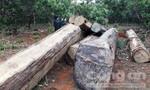 Để xảy ra phá rừng, 5 cán bộ bị kỷ luật, kiểm điểm