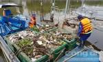 Cá trên kênh Nhiêu Lộc – Thị Nghè lại chết hàng loạt