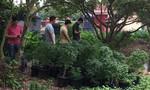 Phá điểm trồng gần 1.000 cây cần sa núp bóng  'Hội thánh Đức Chúa trời'