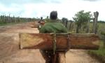 Lật xe tự chế chở gỗ, tài xế bị gỗ đè chết