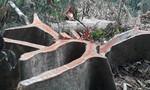 'Thảm sát' ươi rừng để lấy hạt