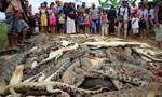 Dân làng giết gần 300 con cá sấu để trả thù cho... hàng xóm