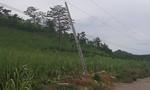 Người đàn ông bị điện giật tử vong khi kê đồ tránh bão