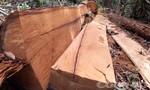 Thu giữ hơn 26m3 gỗ trong vụ phá rừng Đăk Ruồng