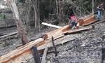 Kỳ lạ việc phá rừng tự nhiên để trồng rừng keo