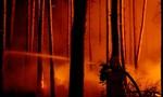 Cháy rừng gần Berlin, khói bao trùm khắp thành phố