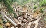 Được giao bảo vệ rừng, thuê người đến phá