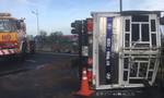 Xe tải chở dừa lật nhào trên cao tốc, 4 ôtô hư hỏng nặng