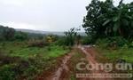 Hơn 507 héc ta rừng giao cho Công ty Long Sơn quản lý đã bị xóa trắng