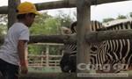 Du khách nhí thích thú tham quan sở thú tại KDL Vườn Xoài