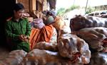 Trộn đất đỏ vào khoai tây Trung Quốc, bán giá cao gấp 3-4 lần