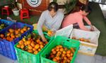 TP.HCM - Đồng Tháp 'bắt tay' sản xuất, tiêu thụ nông sản sạch
