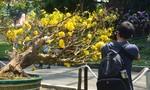 Vô số cây cảnh độc, lạ tại Hội hoa xuân Tao Đàn