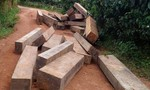Phó ban CHQS xã vận chuyển gỗ lậu, tấn công lực lượng chức năng