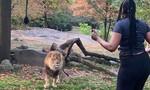 """Clip người phụ nữ nhảy vào chuồng trêu sư tử hứng """"gạch"""" chỉ trích"""