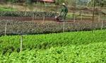 Sửa đổi Điều 16 Nghị định số 45/2014 về thu tiền sử dụng đất