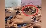Quản giáo tra tấn tù nhân bằng cách cho gà mổ
