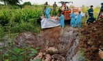 Phát hiện 3,7 tấn heo nhập lậu từ Campuchia