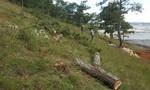 Lâm Đồng: Buộc kẻ chủ mưu phá rừng trồng lại rừng
