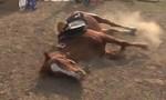 Clip chú ngựa giả chết như diễn viên thực thụ
