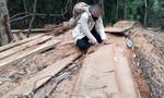 Làm rõ thông tin cán bộ xã thuê người cưa gỗ về sửa nhà